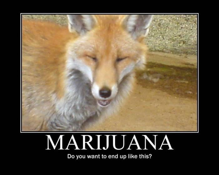 stoner-fox-2bt1.jpg