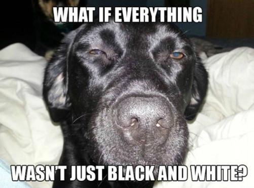 stoner-dog-10-dog-meme-17.jpg