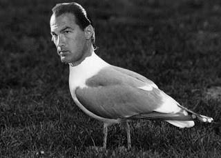 steven seagull.jpg