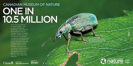 CMN Weevil Positioning Ad
