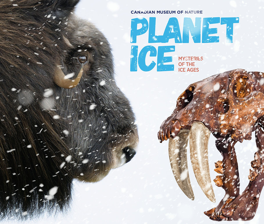 Planet Ice Banner Website.jpg
