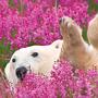 Project_Thumb_CMN_Arctic.png
