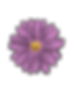 flower_Purple.png