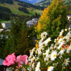 Balkonblumen mit Blick ins Tal.jpg.jpg