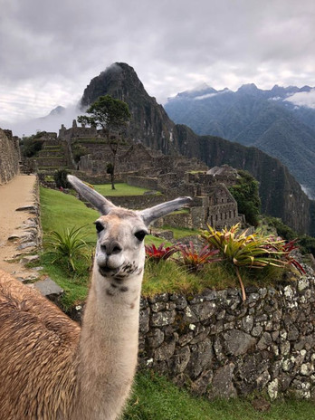 Machu Picchu (with a friend)