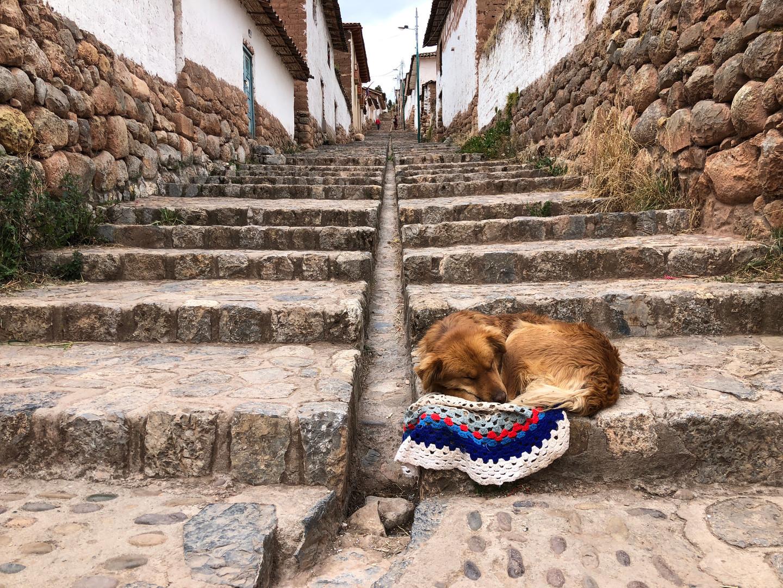 Dog in Chincheros
