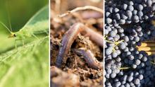 Convegno: Il bello della biodiversità in vigneto - dalle acquisizioni scientifiche alla gestione vit