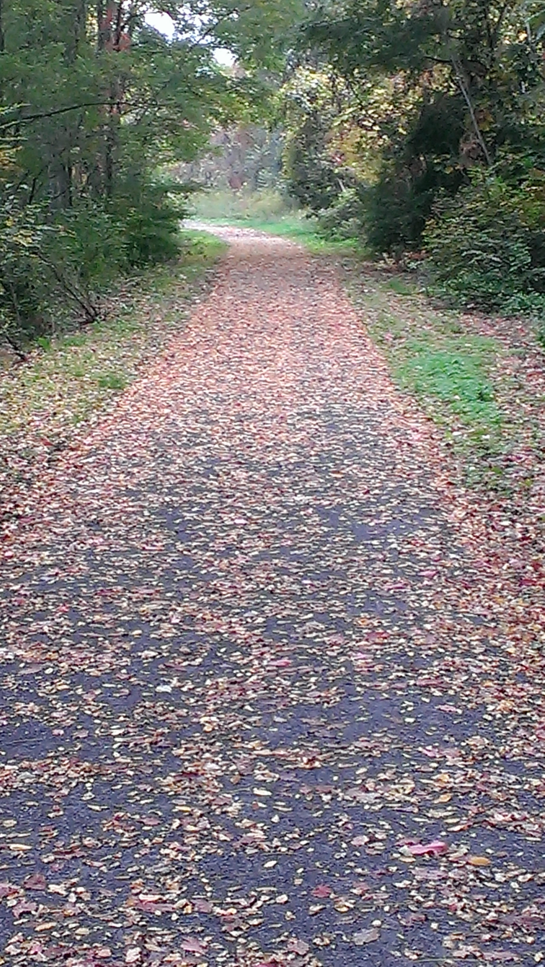 trail in fall.jpg