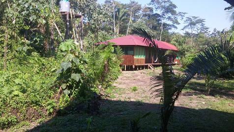 room-amazon-lodge-tambopata.jpg