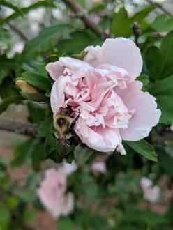 Honey-Creek-Garde-Flowers.jpg