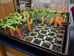 K/1 Seedling Garden Club