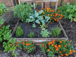 PTO Garden Club - Raised Bed