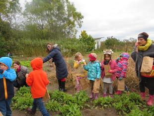K/1 Field Trip - Tantre Farms