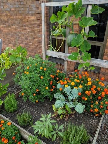 PTO Garden Club