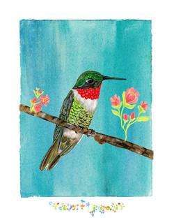 hummingbird on perch