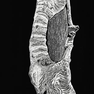 Moonbi tree