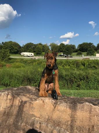 I can climb rocks too!
