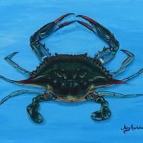 I am blue (Crab)