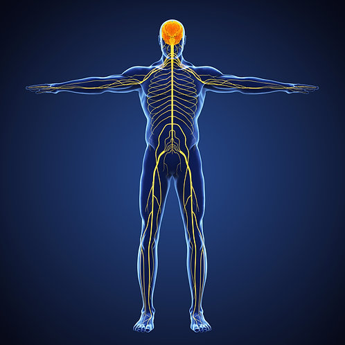 Get to Know Your Nervous System