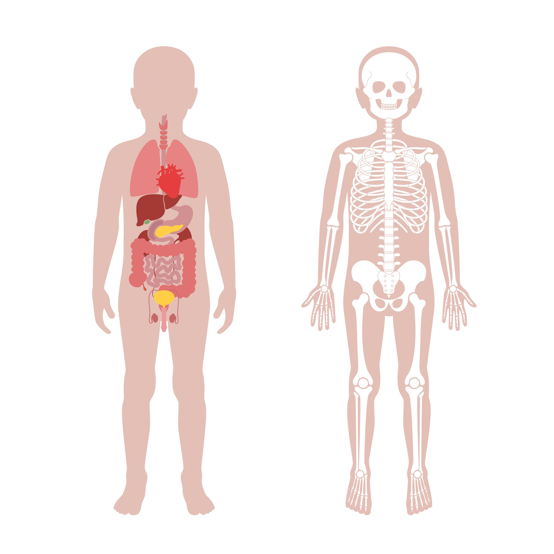 MONDAYS Nutrition and Anatomy