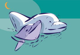 puzzle-dolphins-rounded.jpg