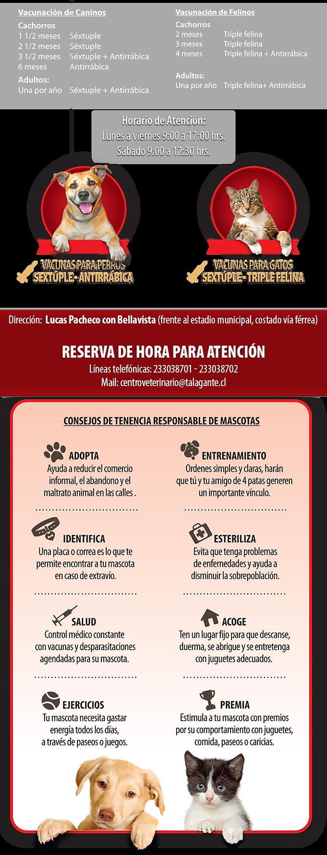 contenido_veterinaria.png