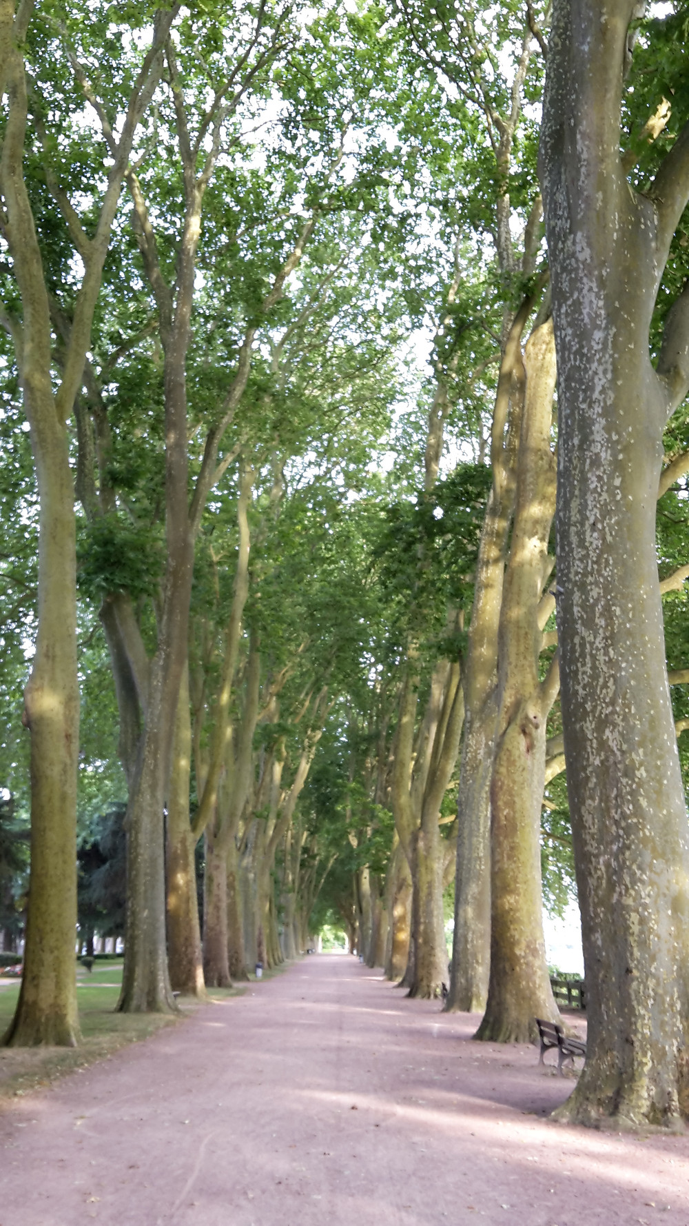 Avenue of trees along the Vienne River, France