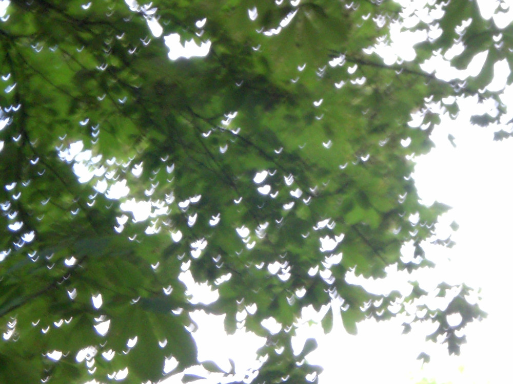 Dappled sunlight through light green leaves on a tree, photograph taken from below the tree