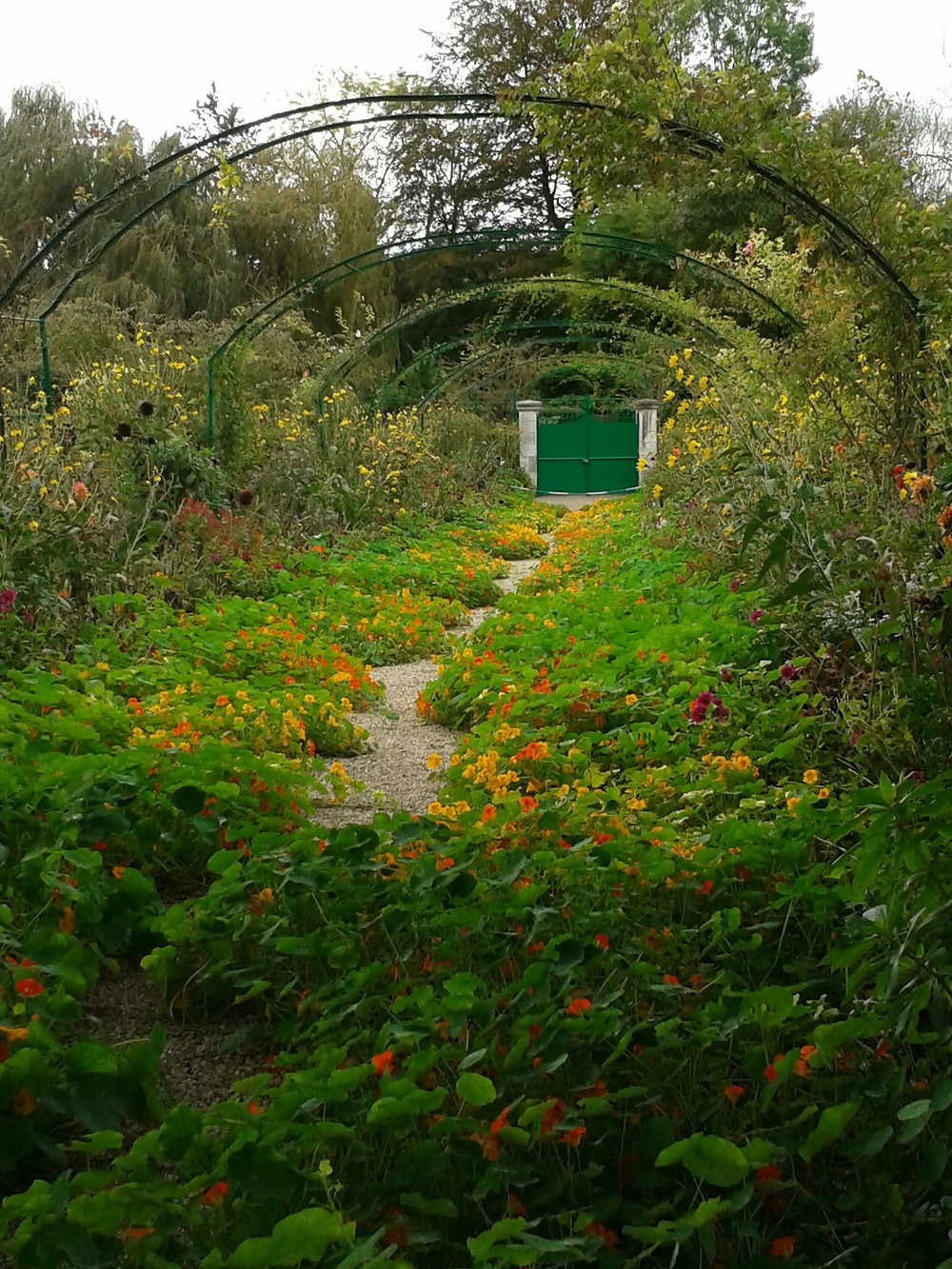 Nasturtiums growing over a garden path leading to a green gate.