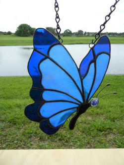 BlueButterfly 1