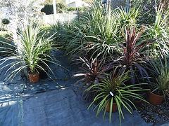 pepinière, fleurs, arbres, jardinerie, bagnol, bagnols sur cèze