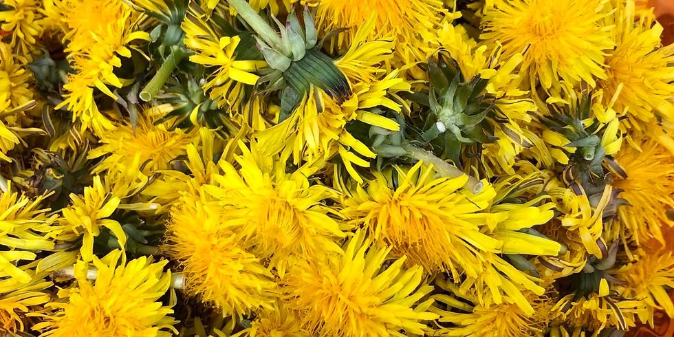 Les plantes : se nourrir, se soigner, réconforter, nettoyer