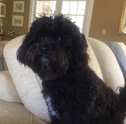 Hugo (Valentines puppy)
