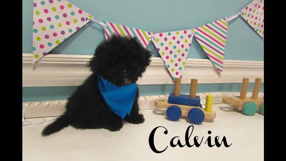 Calvin_9wks