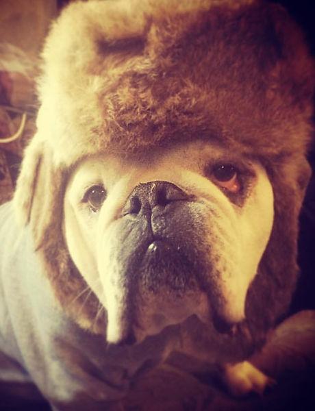#lukethebulldog