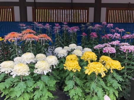湯島天滿宮 菊花祭