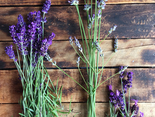 My love for Lavender
