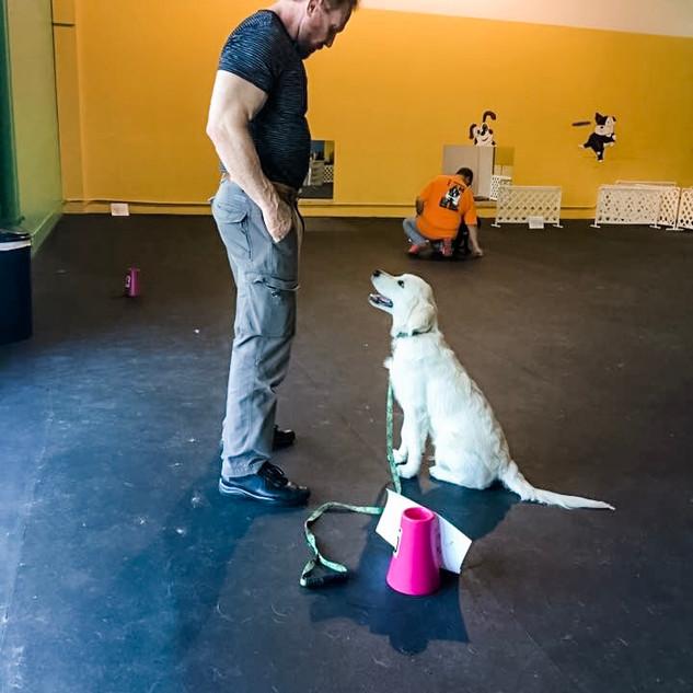 Liam puppy training