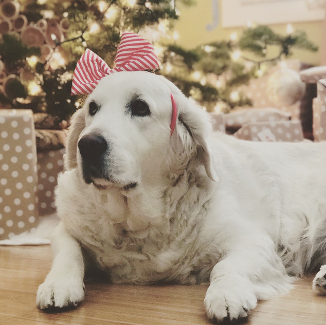 Merry at Christmas