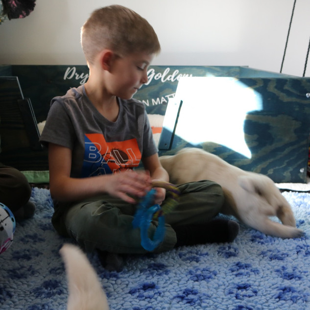 Boy and pups