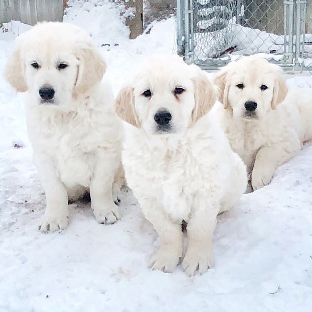 Lily and her brothers