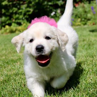 Bailey - pink girl
