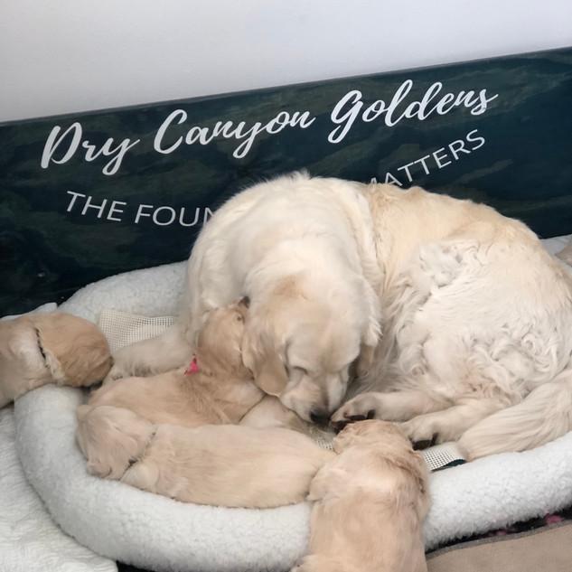 Snuggles with Grandma