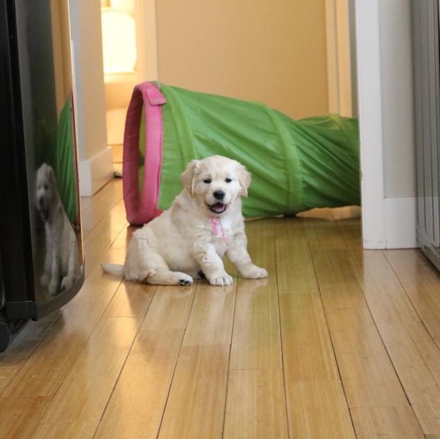 Puppy in Kitchen