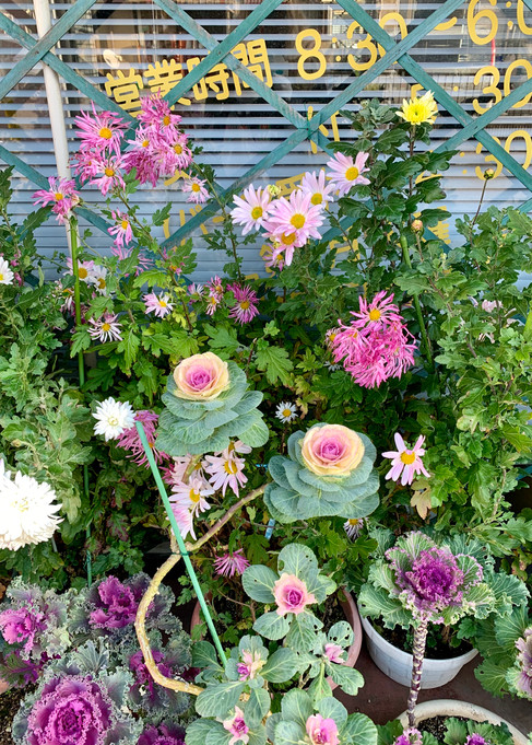 8 Nagahama Flowers