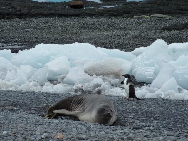 Antarctica+24.JPG