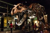 Canada-Dinosaur-Exhibits.jpg