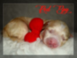 Red Boy sleeping.jpg