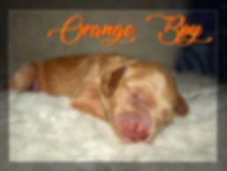 Orange Boy sleeping.jpg