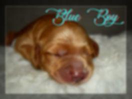 Blue Boy sleeping close up.jpg